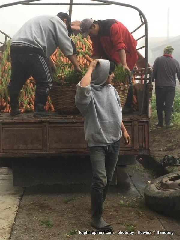 3 Carrot Man Jeyrick Sigmaton Viral KMJS Mountain Province farmer Edwina Bandong