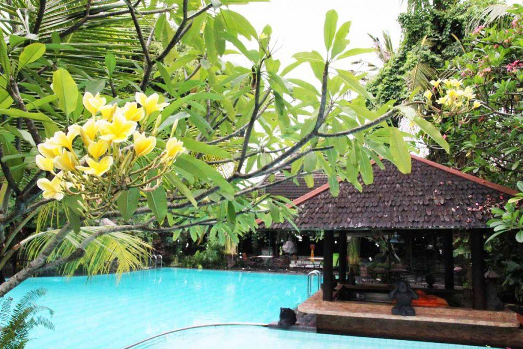dusun-jogja-village-inn-swimming-pool-yellow-flower-yogyakarta-indonesia