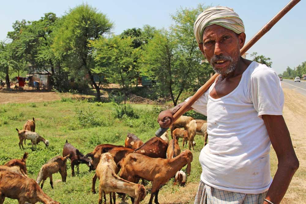 goat-sheperd-sell-jaipur-india-field-goat-seller
